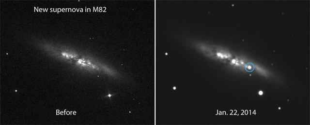 В соседней галактике M82 обнаружена сверхновая звезда. Взрыв через 2 недели