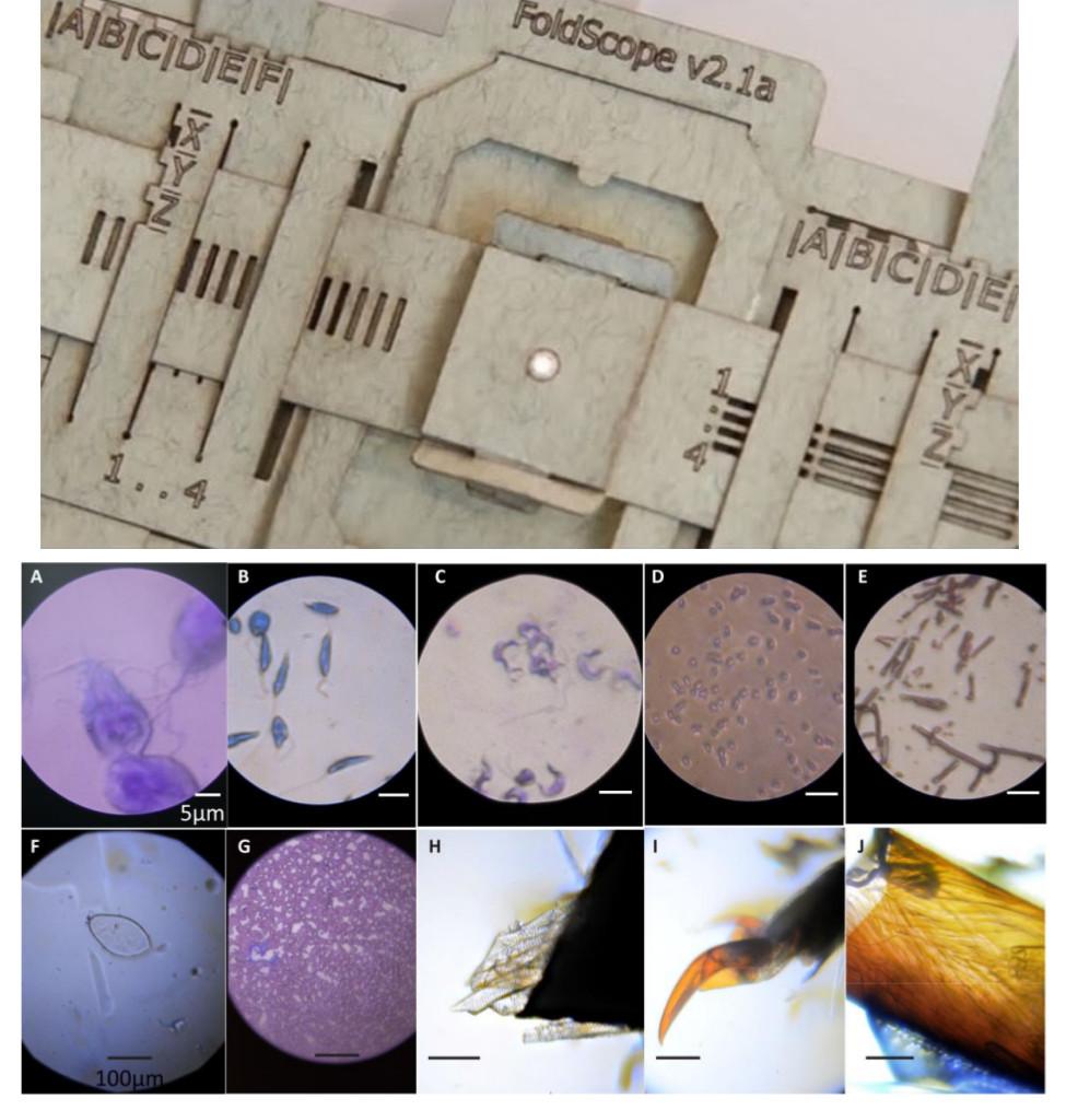 В Стэнфордском университете разработали бумажный микроскоп стоимостью меньше доллара