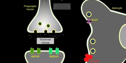 Влияние глиальных клеток на синаптическую связь: скорее да, или скорее нет?