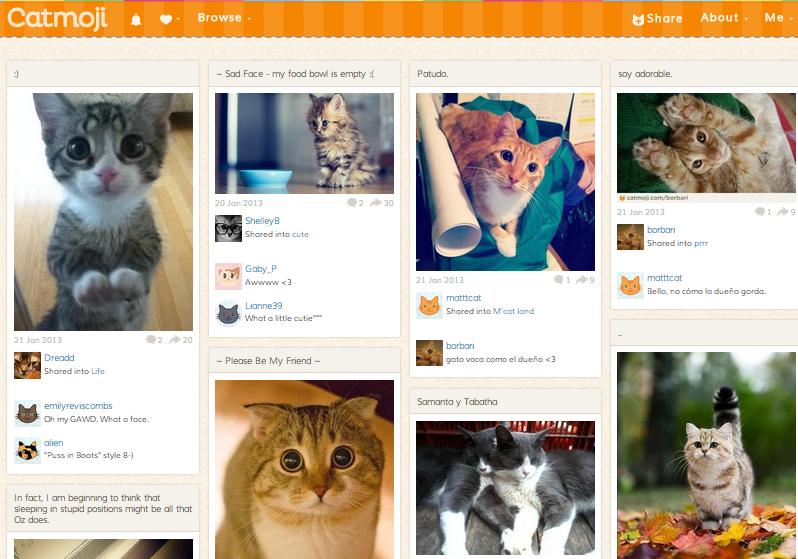 Влияние котиков на развитие технологий