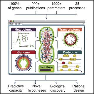 Впервые создана компьютерная модель клетки