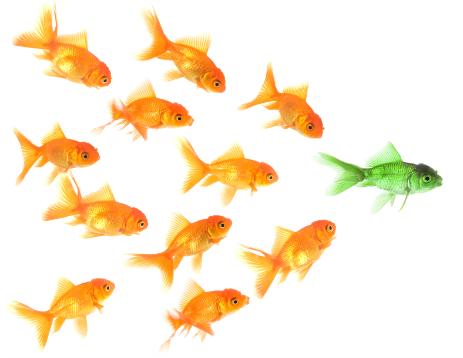 Выбор направления бизнеса или как выиграть холивар