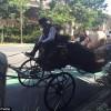 Письма пользователей Uber в австралийский парламент были доставлены в мешках на повозке с лошадью
