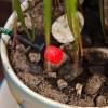Автолейка: обзор возможностей системы автополива растений для дома или офиса