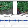 ИИ генерирует реалистичные звуки по видеоряду