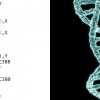 Методы модификации машинного кода: «селекция» vs. «генная инженерия»