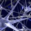 Нейронные сети на Javascript