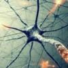 В мозге человека нашли квантовые туннели