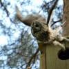 Полет на слабом сигнале: совы, ястребы, бобры и видеонаблюдение