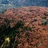Засуха в Калифорнии поразила треть леса, умерло 102млн деревьев