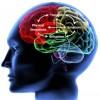 Как мозг решает, что важно, а что нет