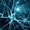 Нейронные сети — XOR [JS]