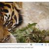 Google представила новую технологию, позволяющую идентифицировать содержимое видеороликов