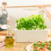Портативный огород Click and Grow. Выращиваем зелень дома или в офисе круглый год