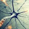 Наши мозги могут быть в 100 раз мощнее, чем мы думали