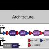 Создан фреймворк BLADE для прокладки вычислительных цепей в ДНК млекопитающих и человека