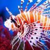 В яде тропических рыб найдено вещество, похожее на героин