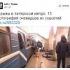 Медиасрачи 2.0: Избалованная терактами Москва, след Кашина и последствия для Терехова