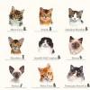 Умеют ли коты строить регрессию?