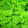 Тамбовские ученые смогли создать растение, которое развивается без земли