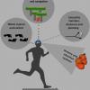 Почему аэробные тренировки так влияют на мозг: причина в эволюции