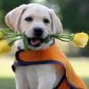 Дружелюбные собаки имеют задержку умственного развития