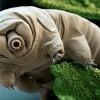 Открылись тайны самых сложных существ мира