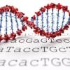 Криптография генома — это новый способ защитить ваши данные ДНК