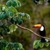 В бразильской Амазонии нашли новые виды животных и растений