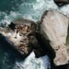 Kaggle: как наши сеточки считали морских львов на Алеутских островах