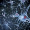 IBM учит ИИ вести себя как человеческий мозг