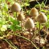 Депрессия хорошо лечится галлюциногенными грибами