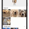 Google Photos теперь лучше распознает животных