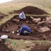На Алтае нашли дерево, которому 8 тысяч лет