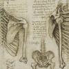 Pediatric Bone Age Challenge. Deep Learning и много, много костей