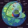 Ядерное мышление эукариот (научная фантазия)