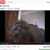 Без новых гаджетов не будет котиков: YouTube перестанет работать на старых устройствах-2