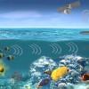 DARPA рассчитывает обнаруживать подводные лодки с помощью обитателей моря