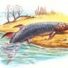 Ученые выдвинули теорию, объясняющую, как рыбы вышли на сушу