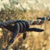 Как фермеры Дикого Запада организовали телефонную сеть на колючей проволоке