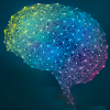 Новый алгоритм позволит симулировать нейронные связи целого мозга человека на будущих экзафлопных суперкомпьютерах