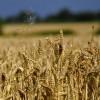 Лаборатория Alphabet X может взяться за сельское хозяйство