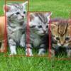Усы, лапы и хвост: как нейронная сеть распознает котиков и другие объекты