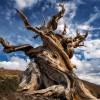 Учёные до сих пор не могут дать определение дереву