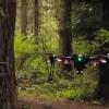 Дроны и нейросети помогут изучить леса