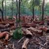 Третья часть природоохранных зон уже повреждена человеком