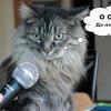 40 «глупых» вопросов о CRM