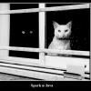 Грузим терабайты бочками или SparkStreaming vs Spring+YARN+Java