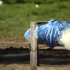 Из пушки по неньютоновской жидкости: видео