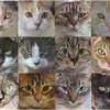 Как ИИ учится генерировать изображения кошек